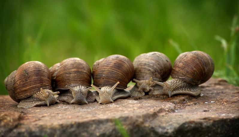 snail-2983235_1280